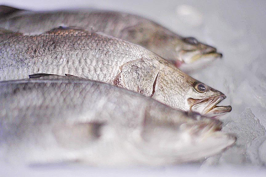 Barramundi fish on ice