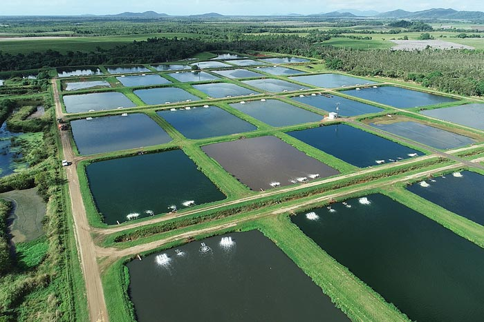 Aerial view of fish farm ponds